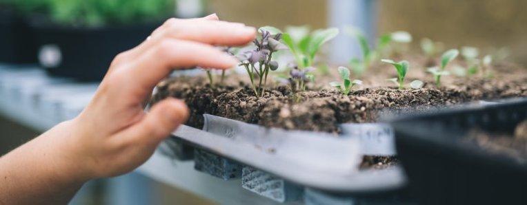 seedlingcrop